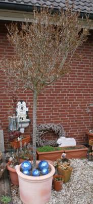 Baum im Topf vor Häuserwand.