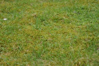 Rasen mit Moos.